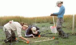 Soil Testing 2.3.2018